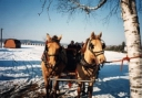 Sleigh Ride - Horses and the Couple